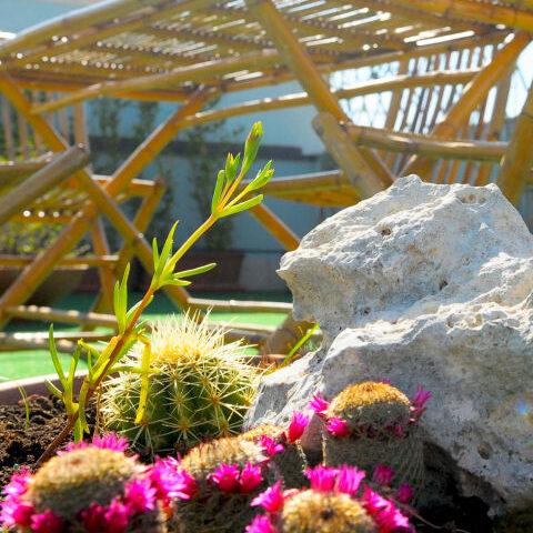 solarium-giardino-b-and-b-avola